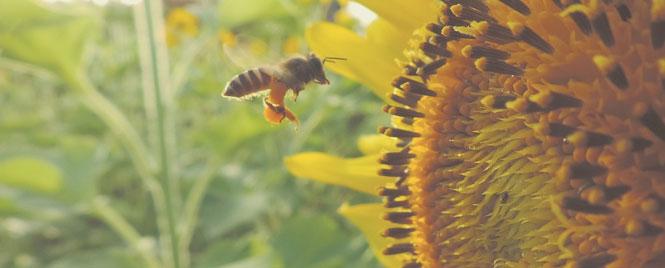 Manuka Honey for Eczema Spoon Hive Bees