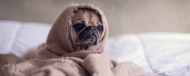 Pets cause eczema